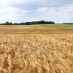 farm field