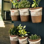 plants in wall mounted pots