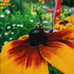 Picture of a bee on a summer flower