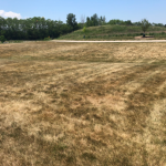 A lawn that has gone dormant due to drought